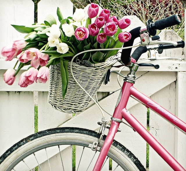 bike with tulips